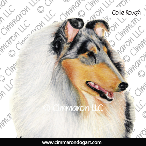 Collie Rough Portrait 007