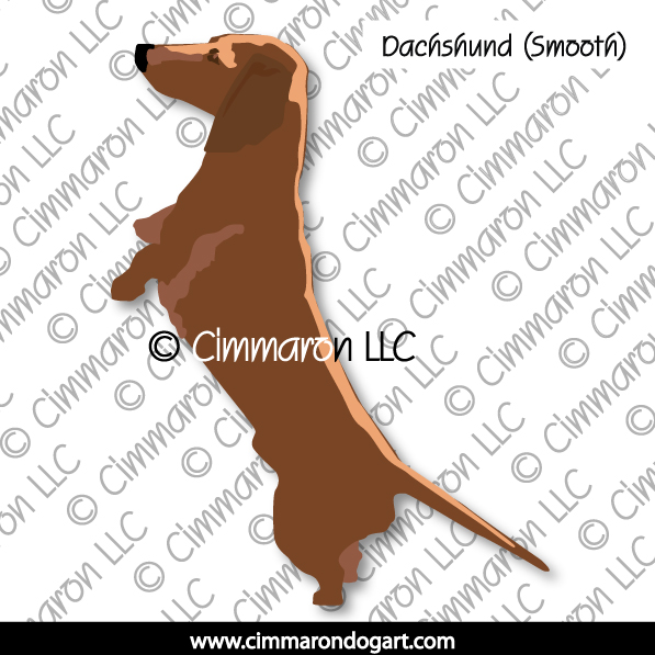 Dachshund Smooth Up on Two Legs 006