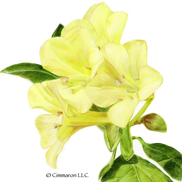 Yellow flowers sweatshirt or hoodie cimmaron dog art canine art yellow flowers sweatshirt or hoodie mightylinksfo