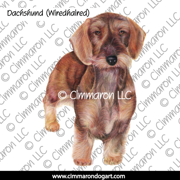 doxie020n - Dachshund (Wirehair) Drawing Note Cards