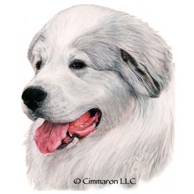 grpry001d - Great Pyrenees